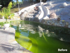 Green Pool Before Pool Service
